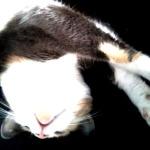 Кошки-акция-1